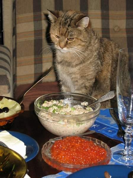 питание кастрированных котов правильное
